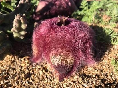 Namaqua Flower Safari Route