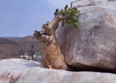 Namaqua Richtersveldt Tours