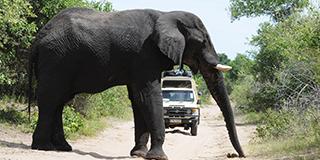 Botswana: Land of the Giants